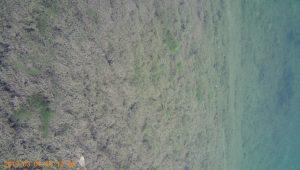 水中4K映像3